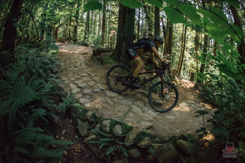 The Belgium Cobbles found in the woods of Mount Seymour.