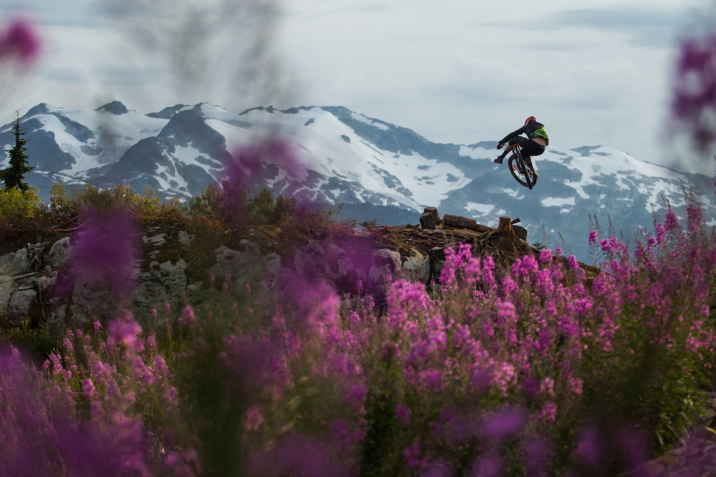 Alpine flowers are in full bloom while Lando keeps the steeze
