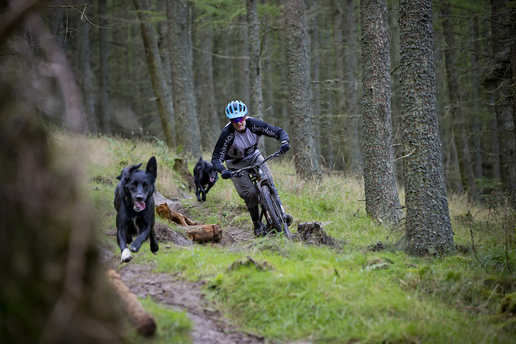 Scott out riding with the dogs