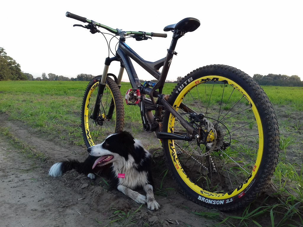 afternoon ride with my border collie