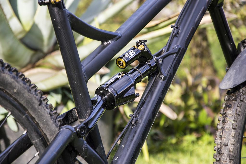 Dartmoor Blackbird