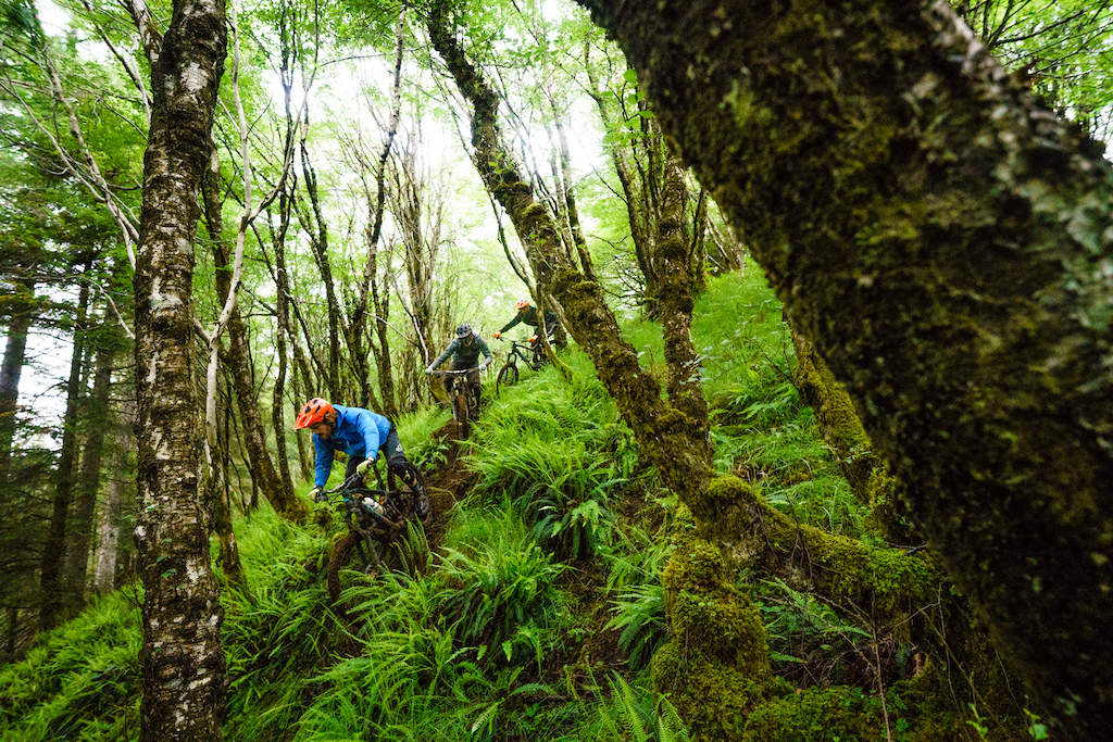 The lush wet woods of the Scottish Highlands have become notorious for their muddy tracks.