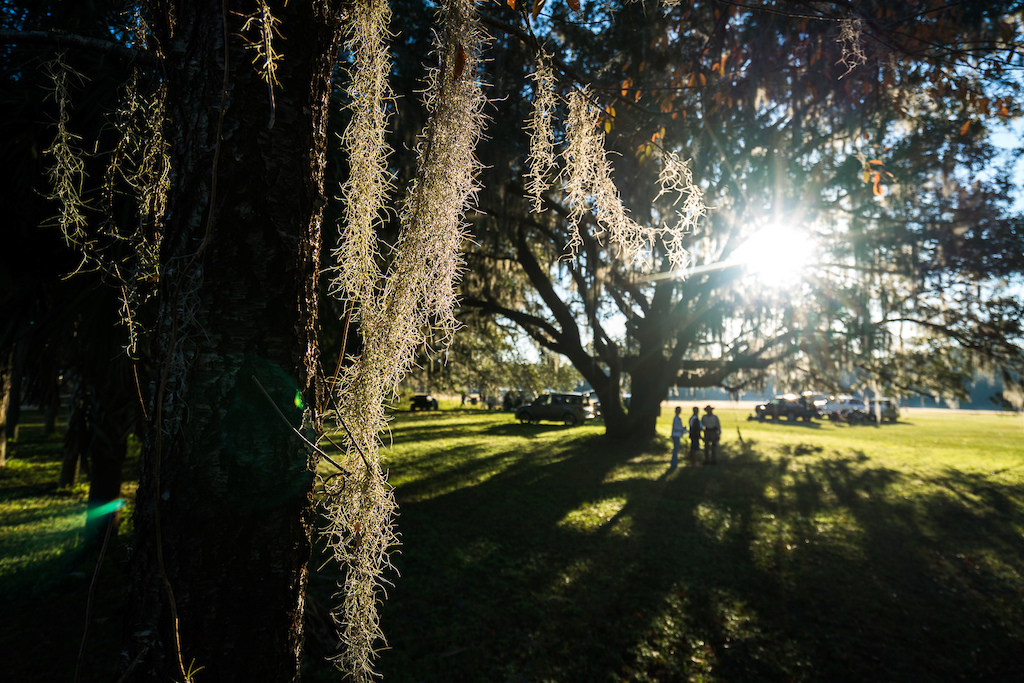 Early Morning Sun filters through the Spanish Moss hanging in the trees as people arrive for the start of the 2017 Rocks Roads Reggae ride.