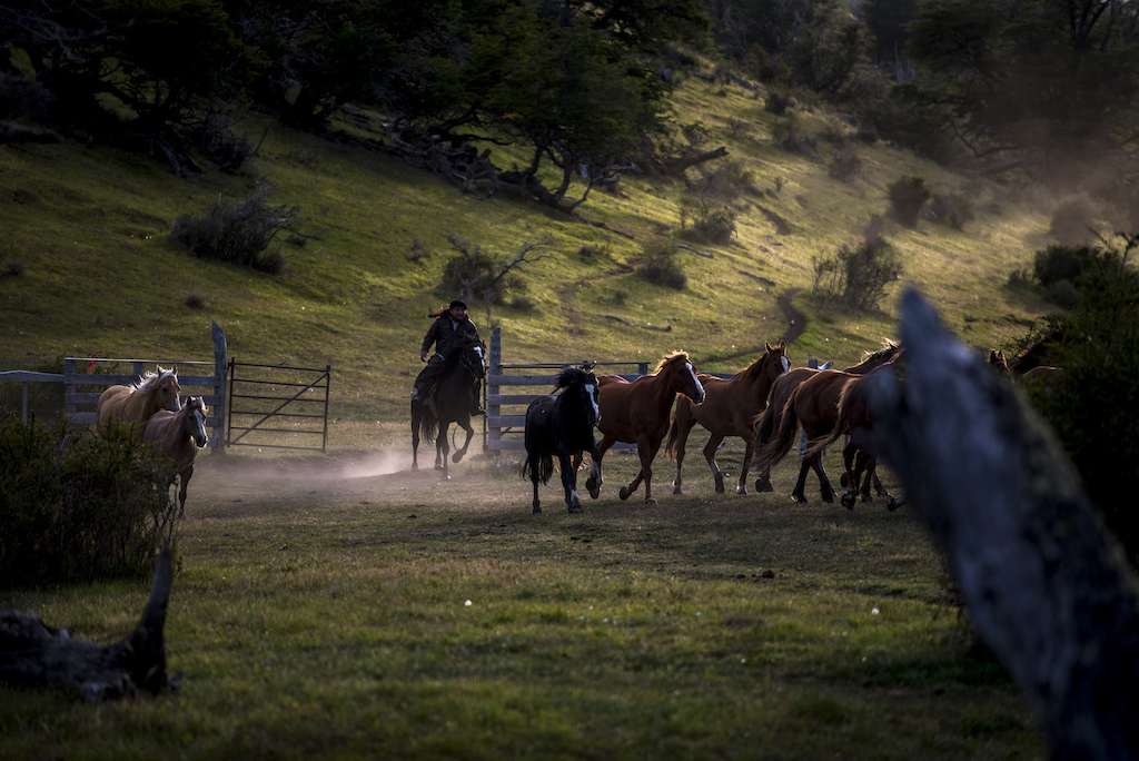 Bringing in the steeds