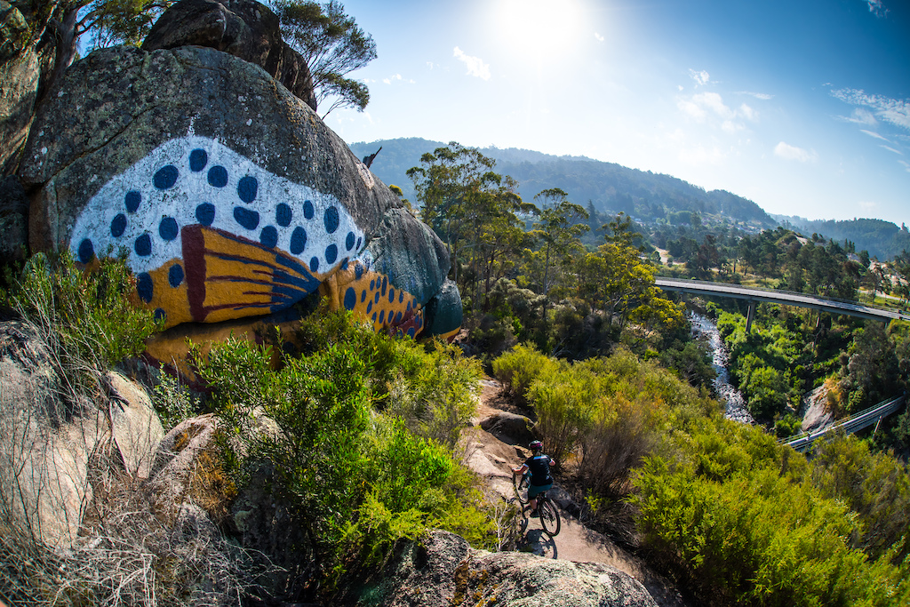 Passing past the rock painted as a Rainbow Trout. This was stage 6 of EWS Shimano Enduro Tasmania .
