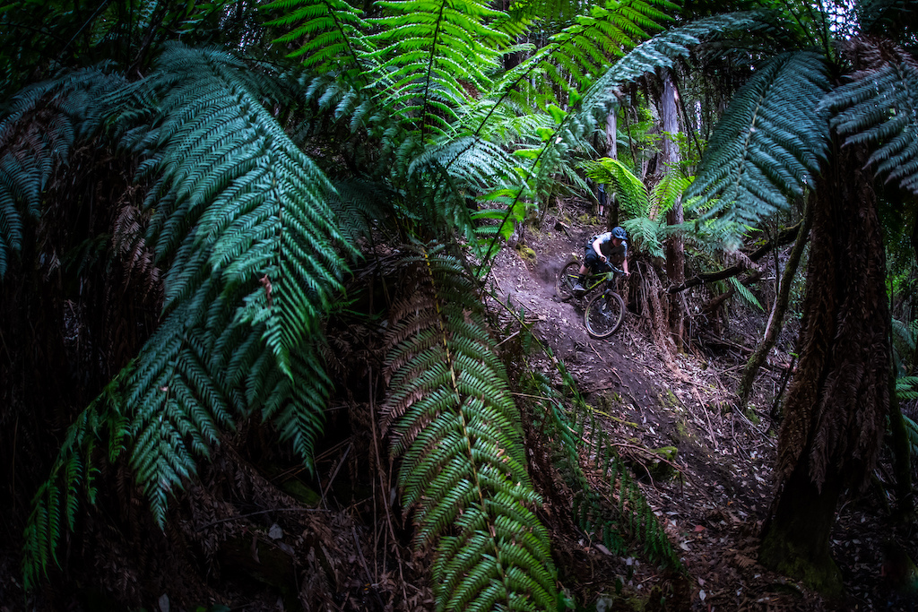 The hand-dug loamy steepness of the In-Fern-O will be sure to please.