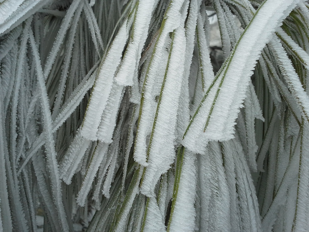 Ribbons of ice crystals due to freezing fog