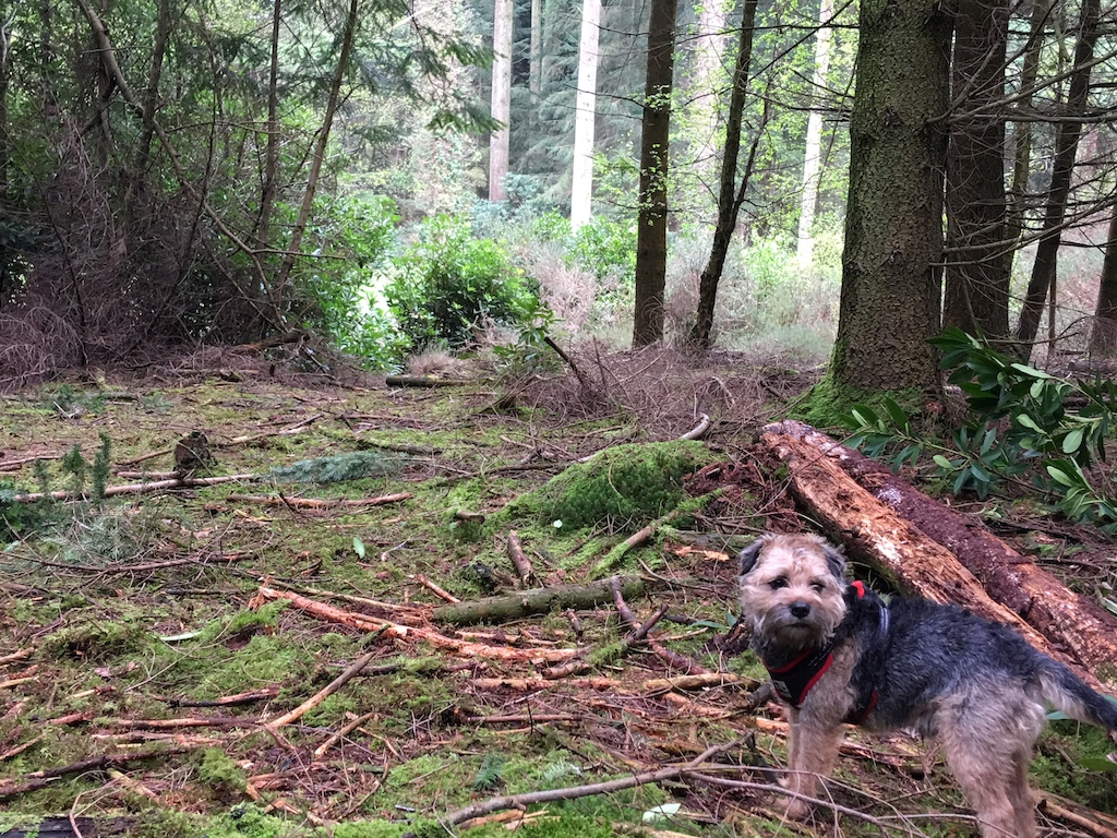 Playing in the woods with the ewok