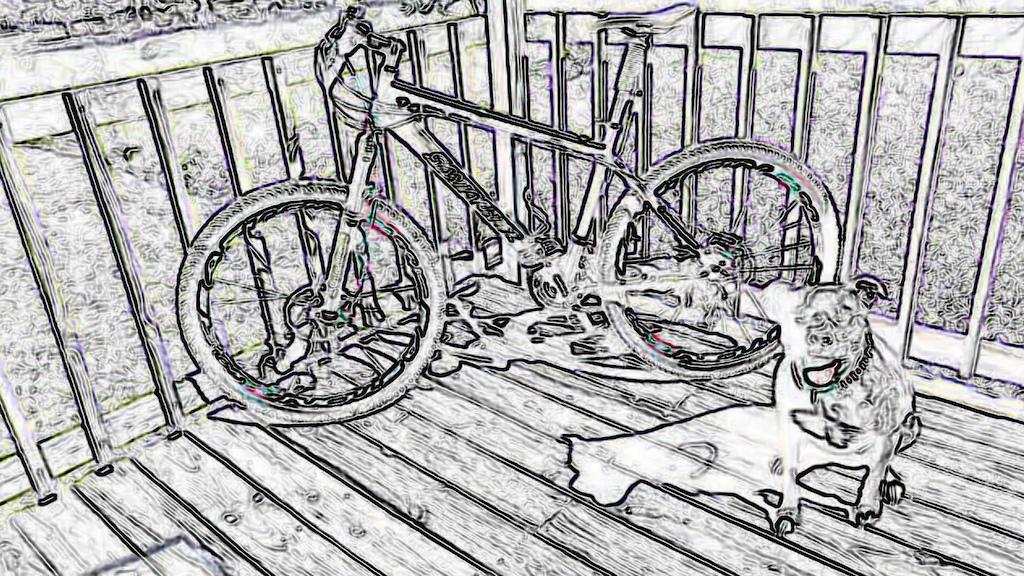 bike and dog