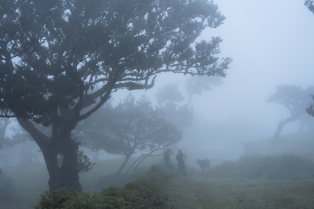 Dodging cows sleeping in the mist.