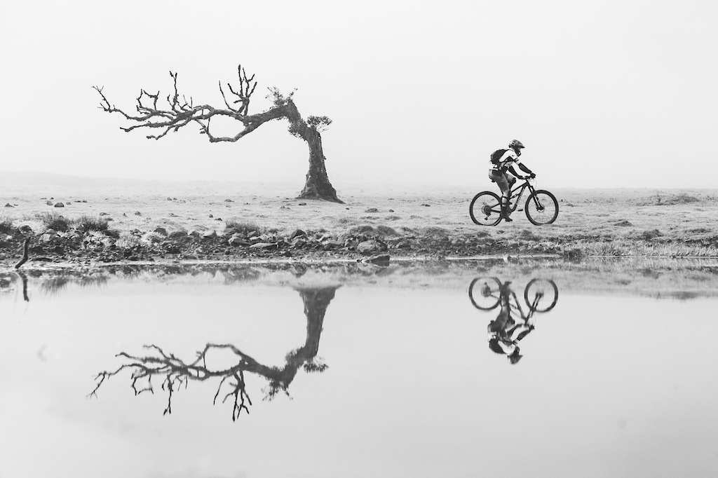 Modern art. The bike and a tree in the mist before stage one today.
