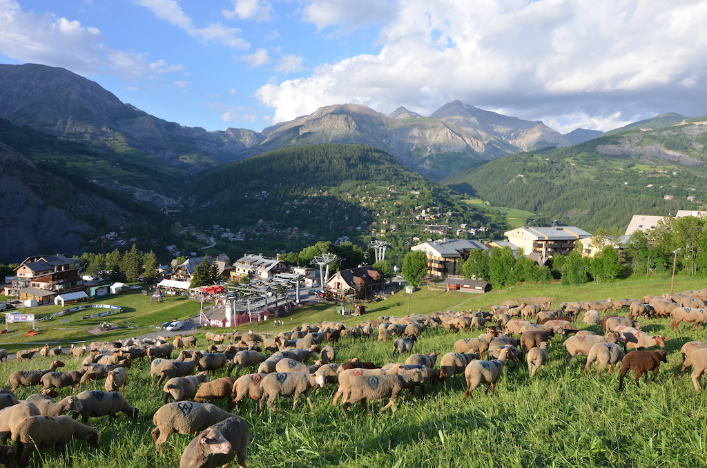 Landscapes for everyone...and sheeps too