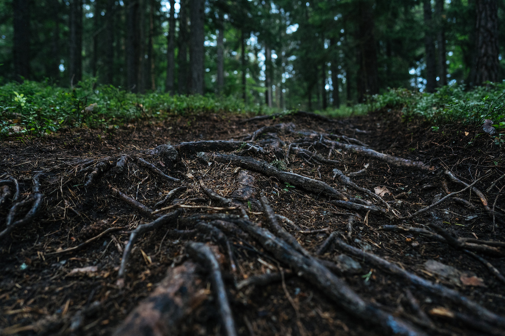 A loam line burned through the blueberries.