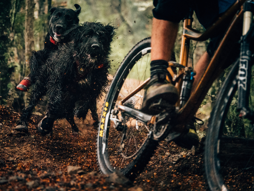Frank's face sums up the stoke in this photo! Checkout the latest NZ Mountain Biker for some great tips on riding with man's best friend.