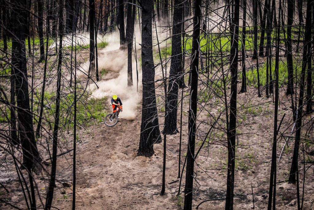 Ollie Jones blazin' trail through a burnt forest.