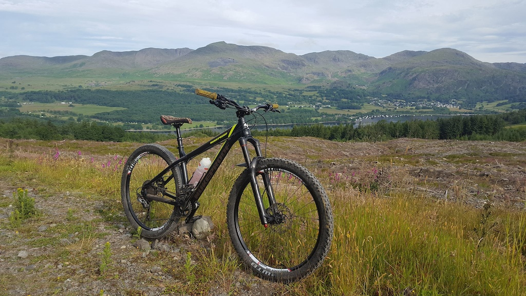 Taking in the views over Coniston from Grizedale Forest