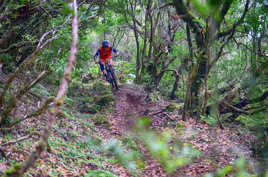 Deep in the laurisilva forest trails are completely covered on vegetation