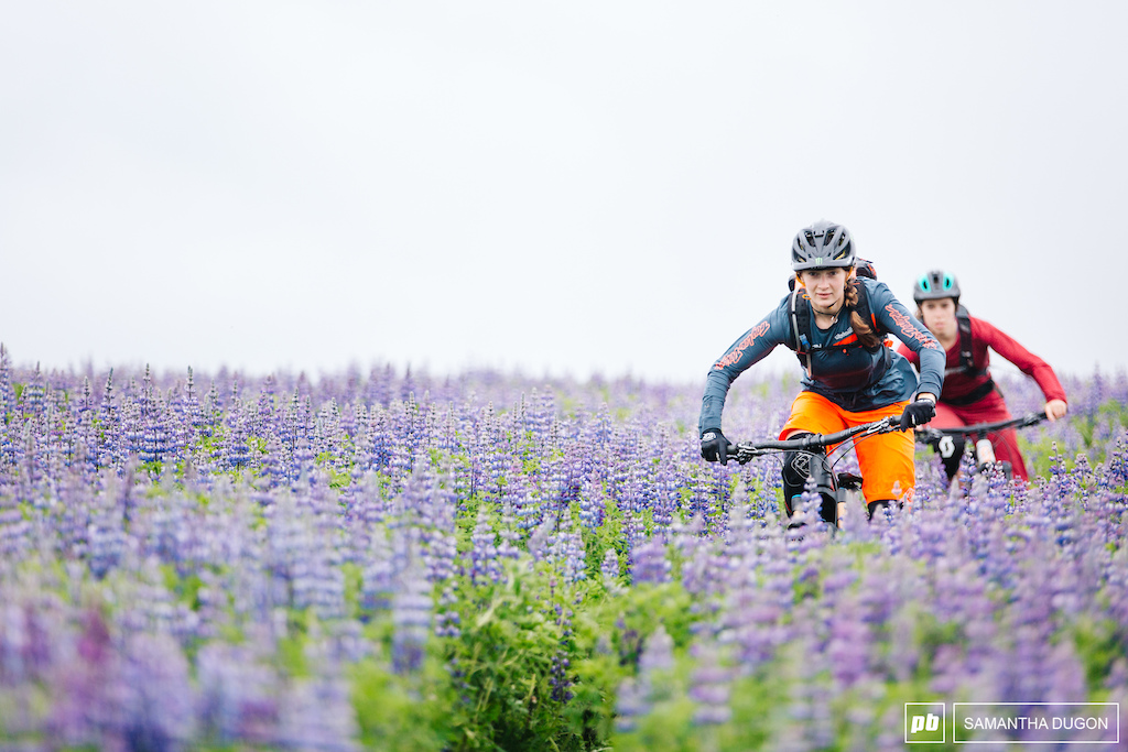 Riding and winding through the colourful Lupine flowers