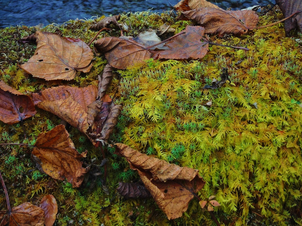 Do the moss also autumn leaves?