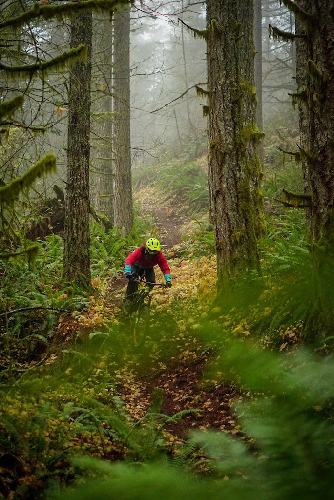 Great winter riding in the Tillamook State Forest, Oregon. Photo by Kerstin Holster