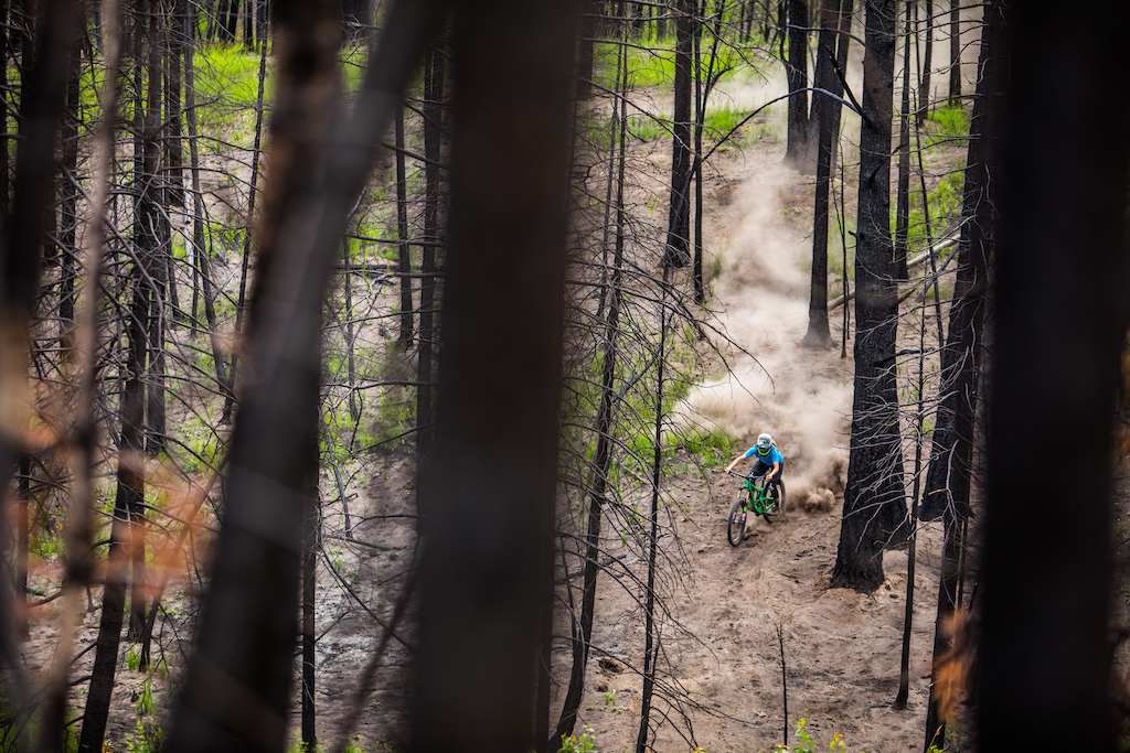Hailey Elise enjoying the loose char grilled forest floor. With devastation brings new life and this forest in Cache Creek is doing just that.
