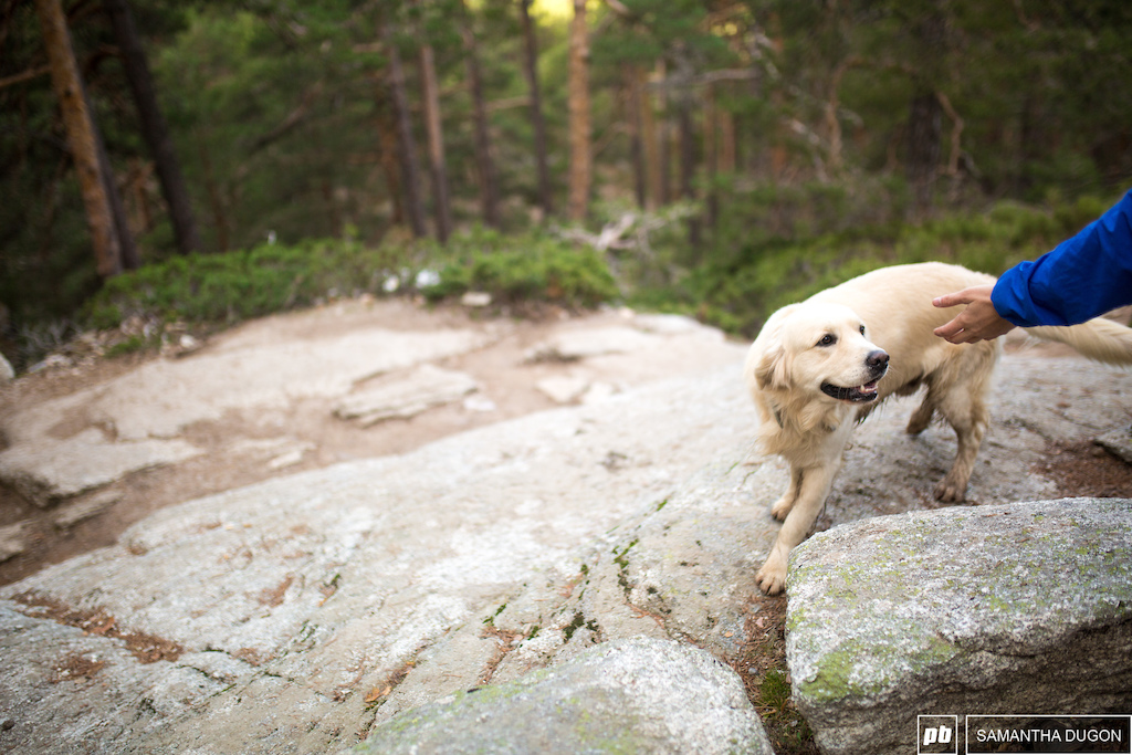 We met plenty of good doggos on our trip.