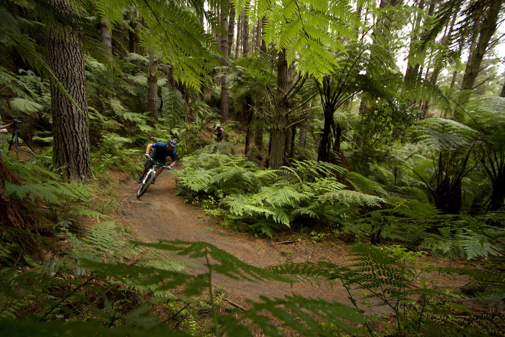 Deep in the Whakarewarewa Forest. Photo Destination Rotorua