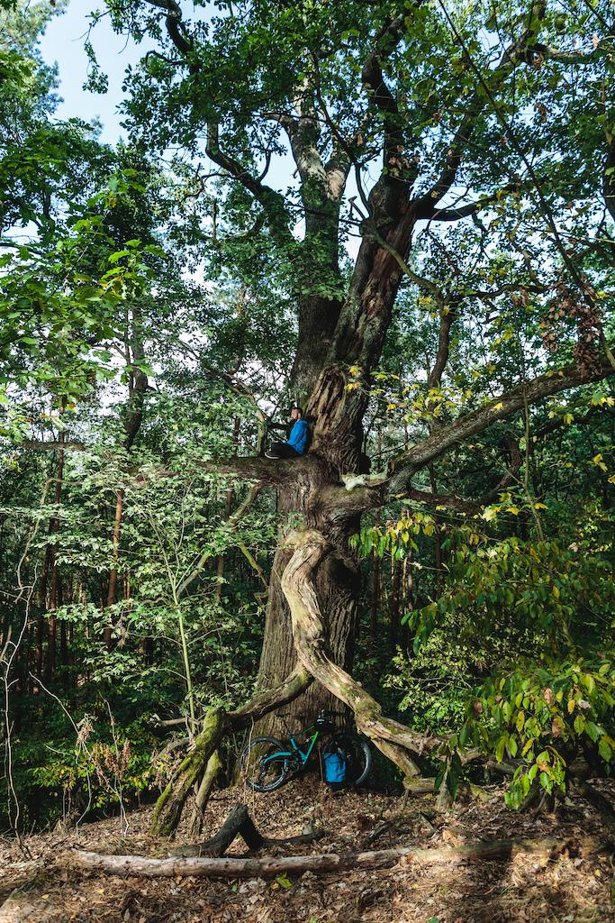 my meditation tree.