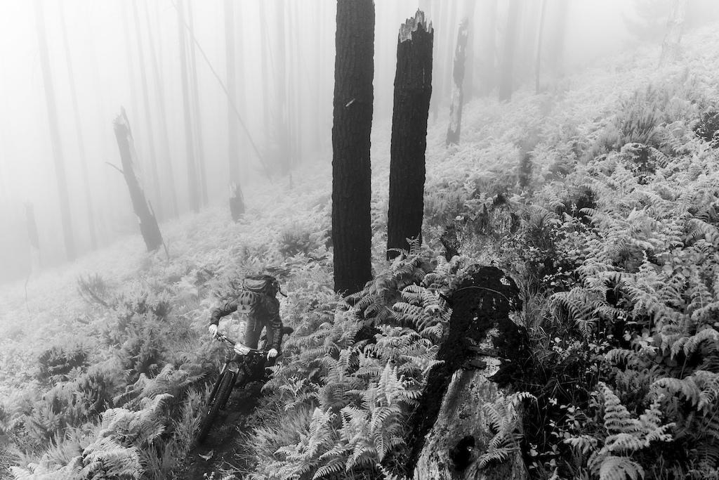 Misty mountain liaisons.