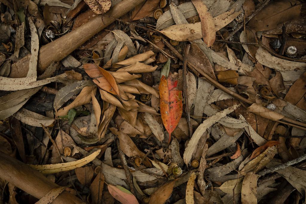 Leaf litter soon to be loam.