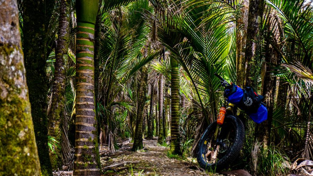 Coastal Nikau Forest