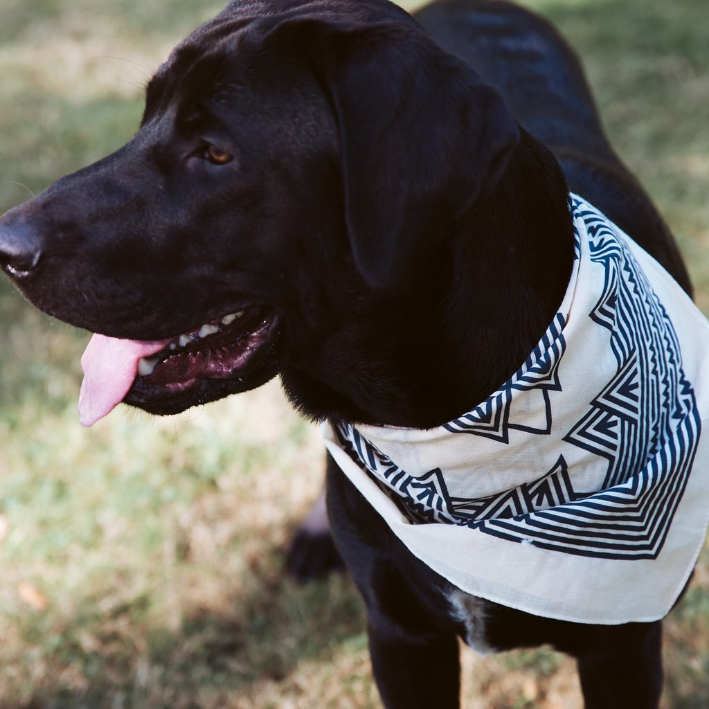 100 of proceeds go the Best Friends Animal Society. Get yours here https www.pnwcomponents.com collections pnw-gear products pnw-doggo-bandana