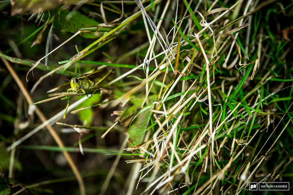 Six legged friends of the long grass, unlike the dreaded biting black flies