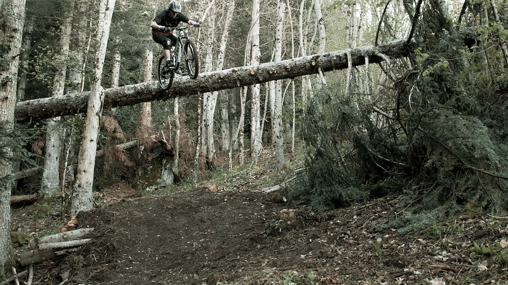 Tree ride to drop.