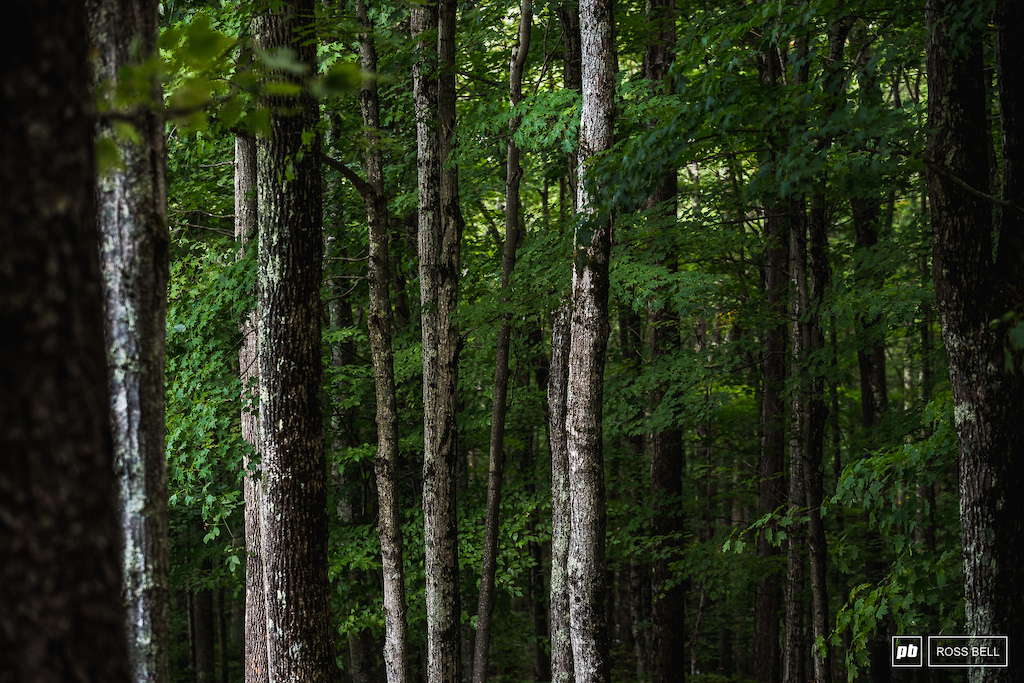 The quaint forests of West Virginia.