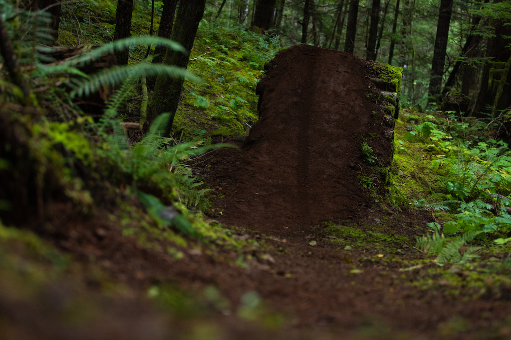 Hand sculpted and nearly reclaimed by nature this jump was built by Mark with filming in mind.