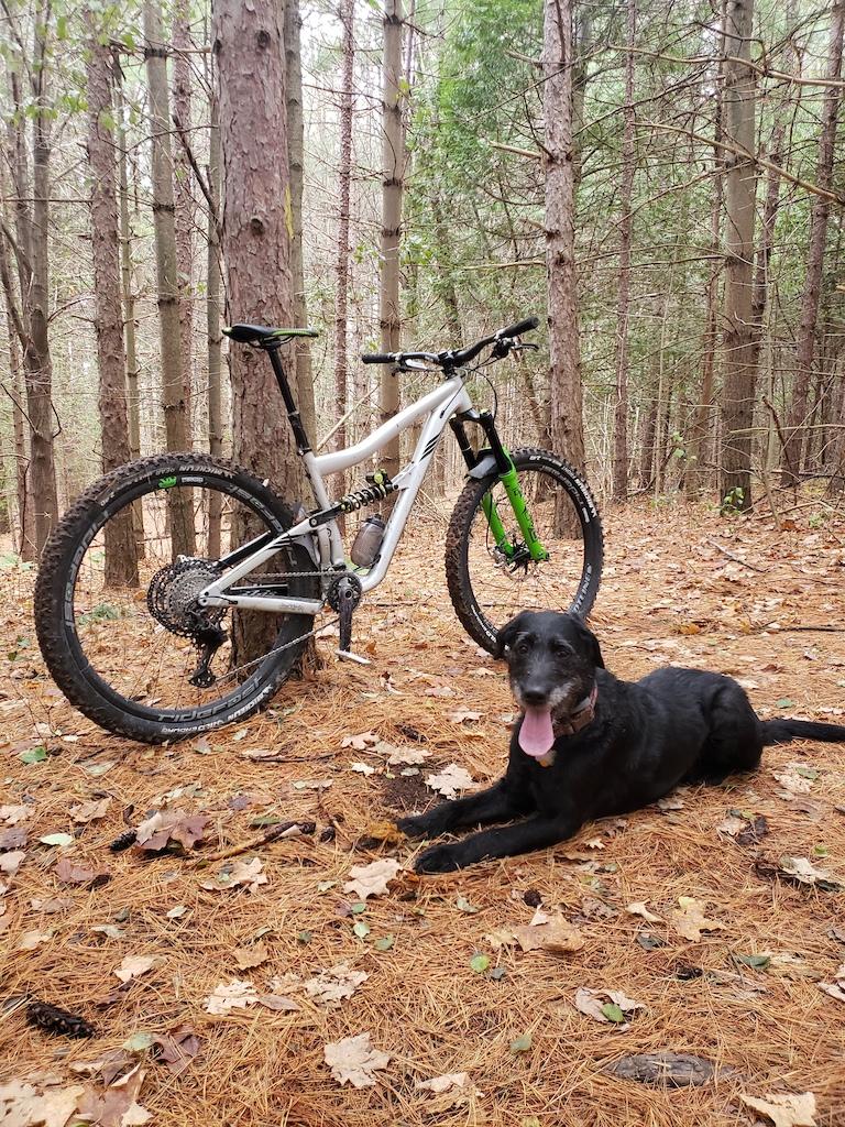 Abby bike dog