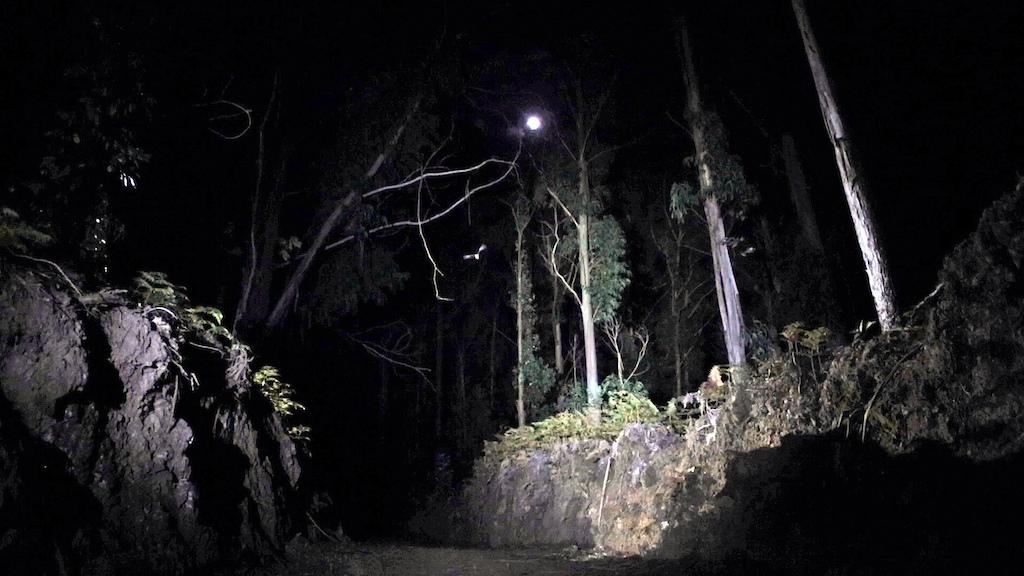 Night Riding the Rabbit