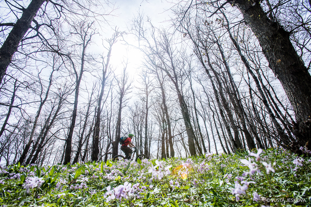 Following ancient summer pasture routes high up into the Caucusus through the spring bloom.