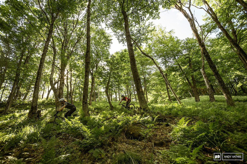 James Jeannet and Dominick Menard through the trees and ferns deep in Mont Saint Anne QC.
