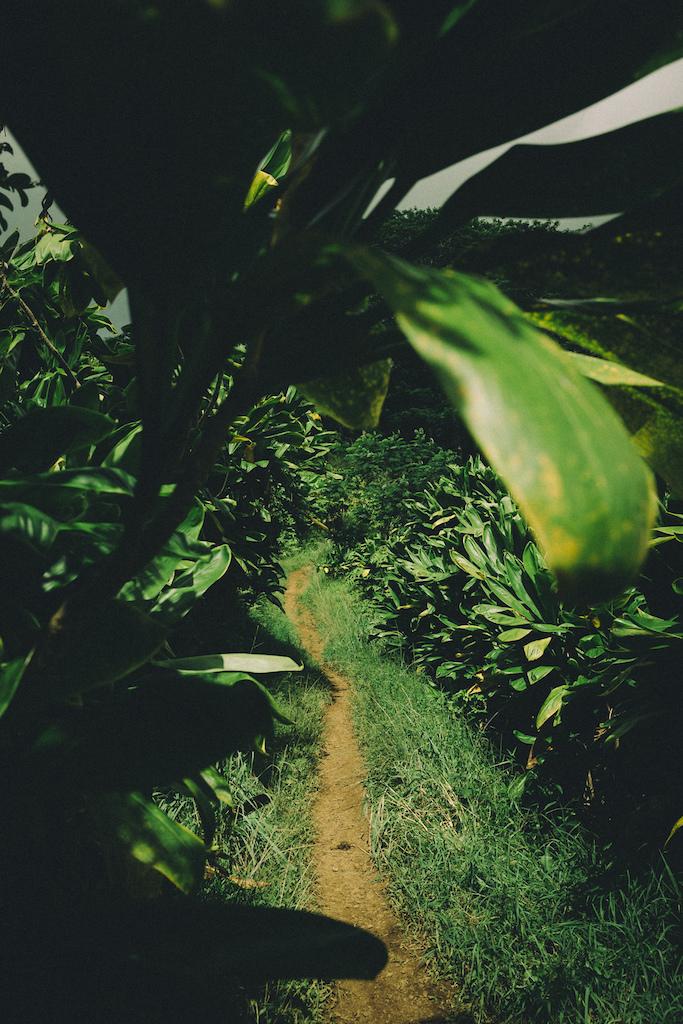 rides the Kuilau Trail in Kauai USA