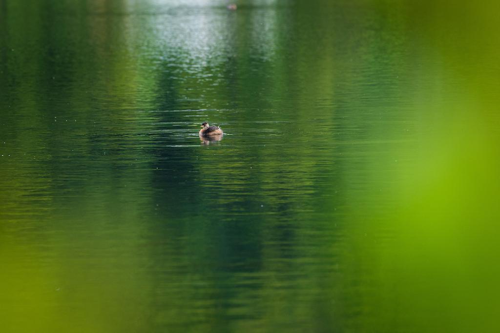 It is not a duck