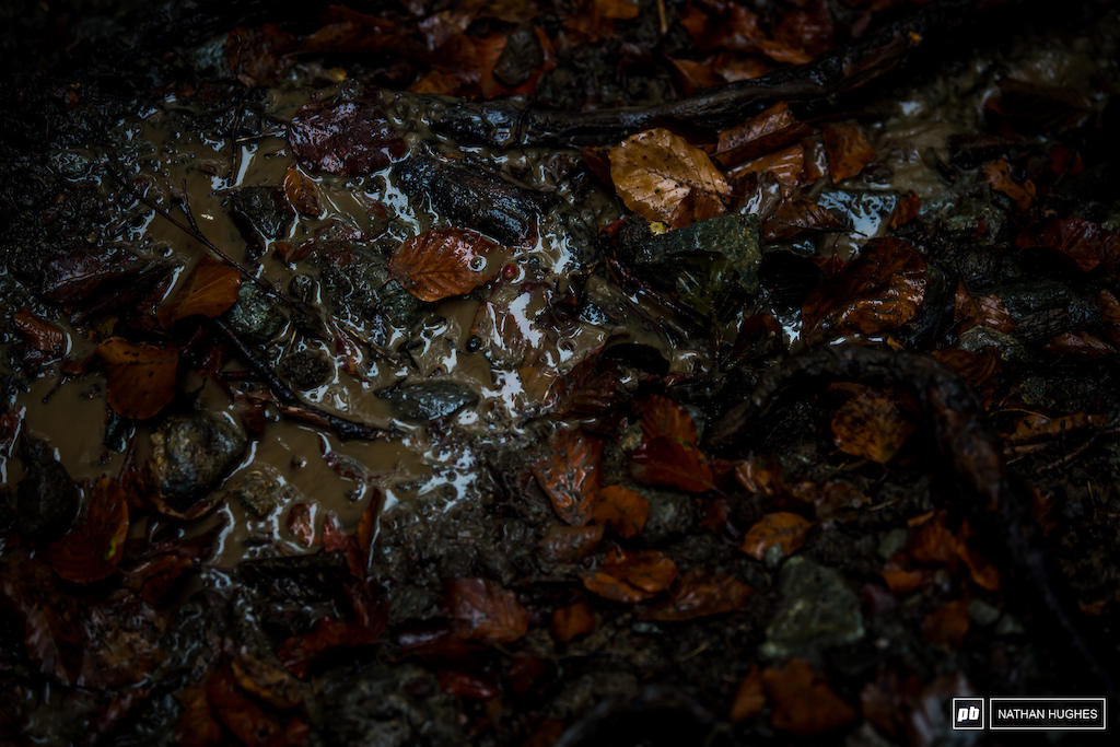 The discovery that people do actually read the captions has hit us hard.  The pressure is now too much. Here's some wet leaves.