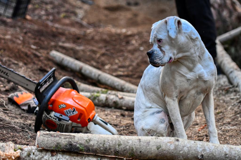 Best trail watch dog ever