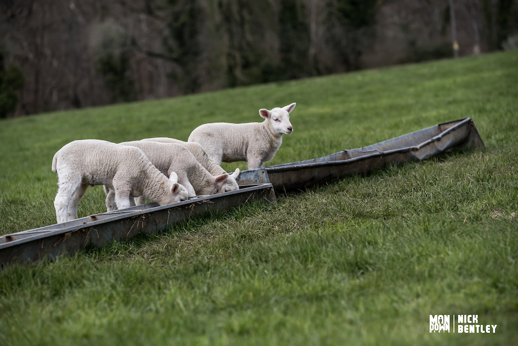 prof that even though it did snow it really is spring here in the UK the lambs were out at the host farm.
