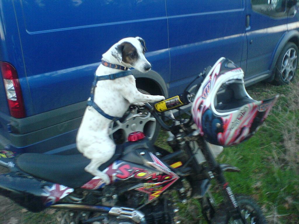 Top Dog Dirt Biker