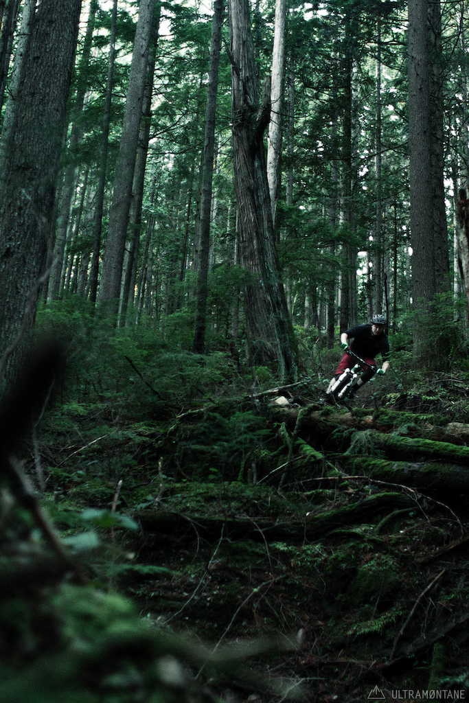 Fast corner next to an old growth cedar.