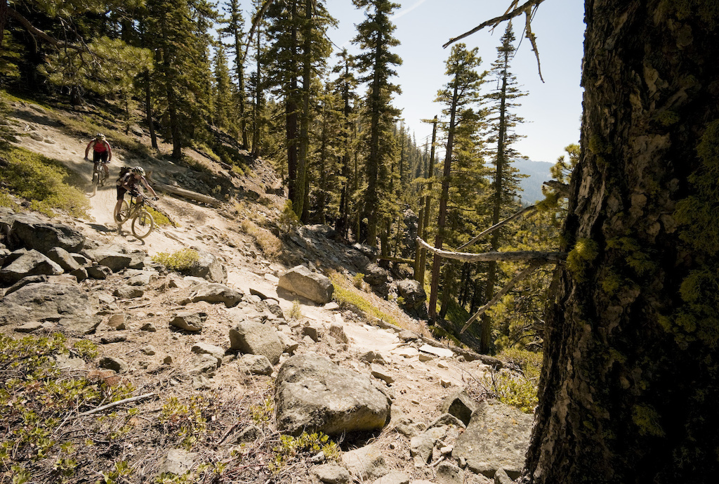 Western states trail in all its wooded glory. Photo by Dan Milner.