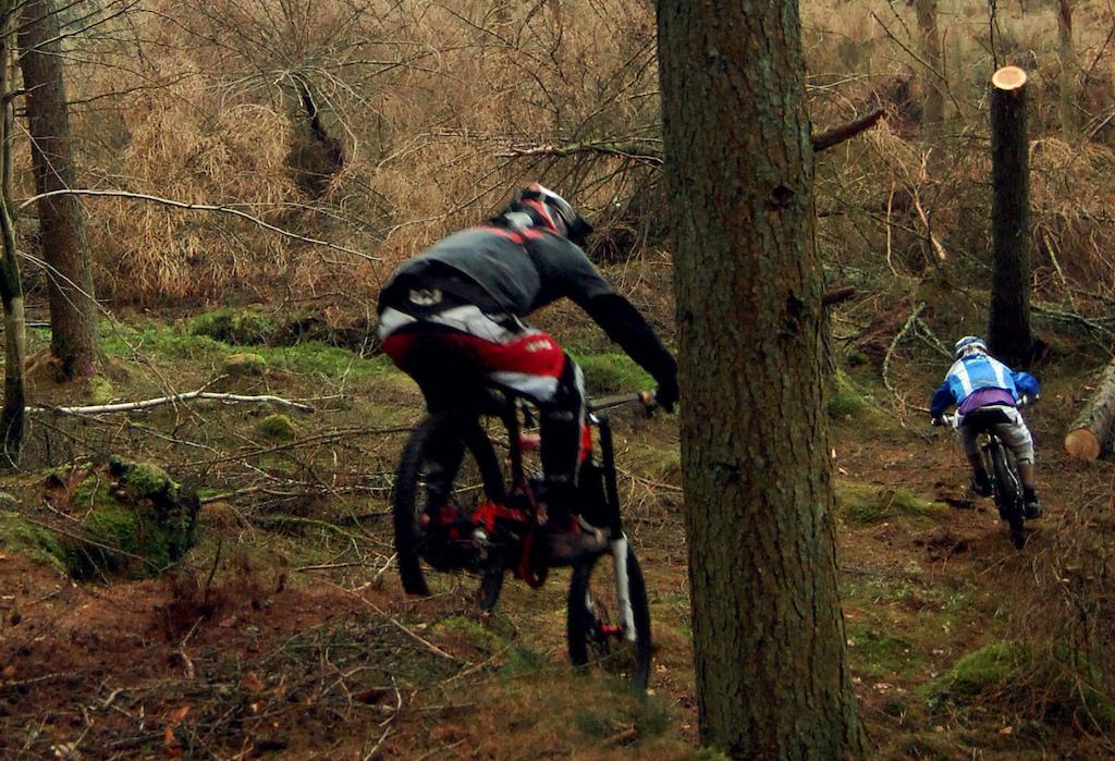 Shredding in the woods