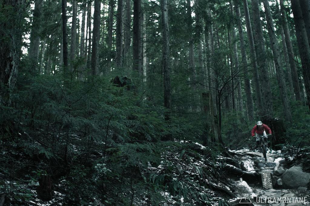 Cool woods.